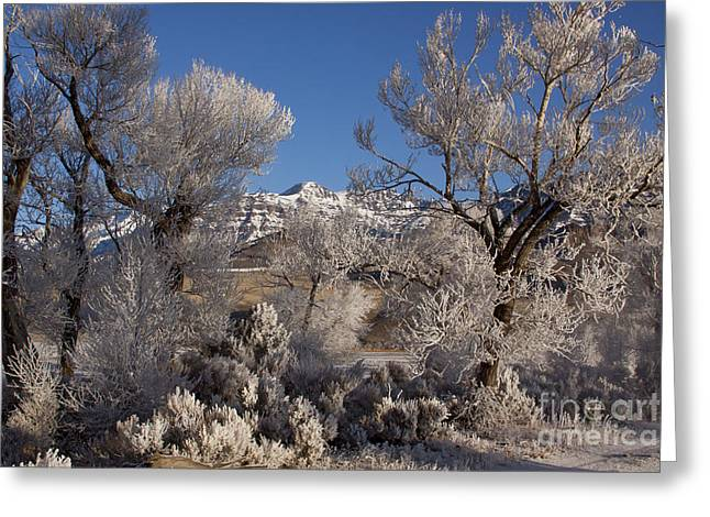 Hores Greeting Cards - Hore Frost And Jim Mountain   #3834 Greeting Card by J L Woody Wooden