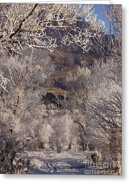 Hores Greeting Cards - Hore Frost Around The Corrals   #3827 Greeting Card by J L Woody Wooden