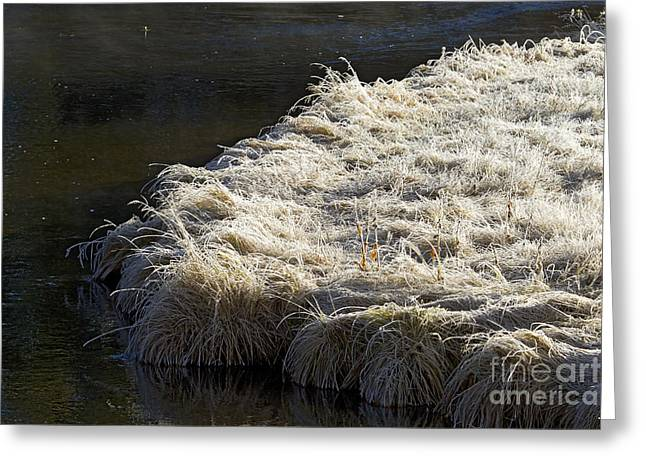 Hores Greeting Cards - Hore Frost On The Gibbons River   #9896 Greeting Card by J L Woody Wooden