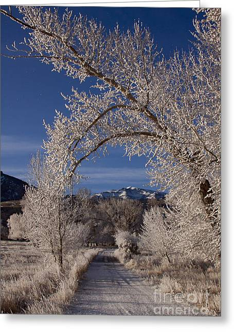 Hores Greeting Cards - Hore Frost On The Road To Ptarmigan Mountain   #3863 Greeting Card by J L Woody Wooden