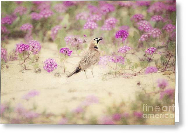 Horned Larks Greeting Cards - Horned Lark in Wildflowers Greeting Card by Susan Gary