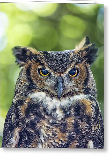Cute Owl Greeting Cards - Horned Owl Up Close Greeting Card by Bill Tiepelman
