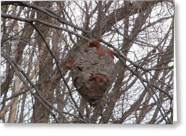 Cocoon Greeting Cards - Hornets Nest East Greeting Card by Tina M Wenger