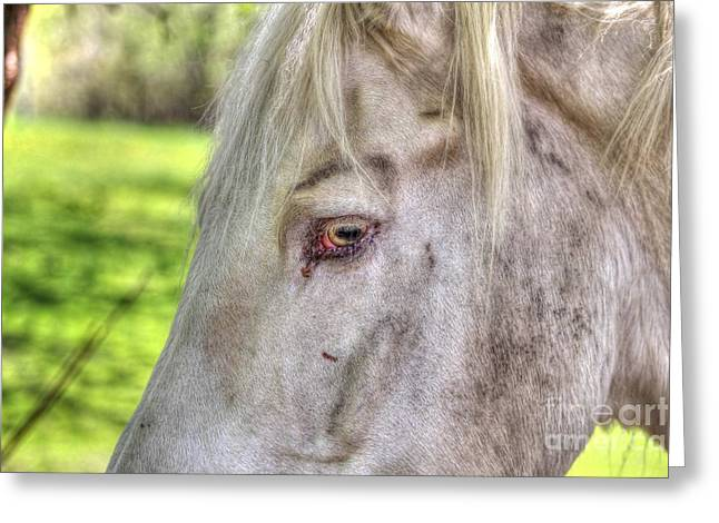 Equestrian Prints Photographs Greeting Cards - Horse 2 Greeting Card by Jimmy Ostgard