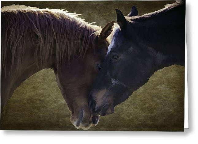 Safe Haven Greeting Cards - Horse Affection Greeting Card by Jacque The Muse Photography