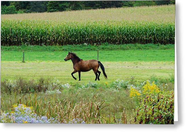 Cornfield Mixed Media Greeting Cards - Horse Amidst Many Colors Greeting Card by Sherry Brant