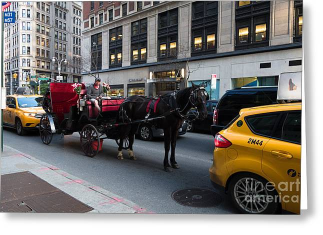 Taxis Greeting Cards - Horse and Carriage NYC Greeting Card by Amy Cicconi