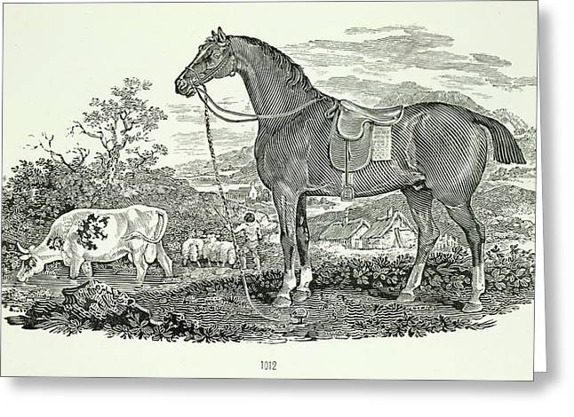 Horse And Cow Greeting Card by British Library