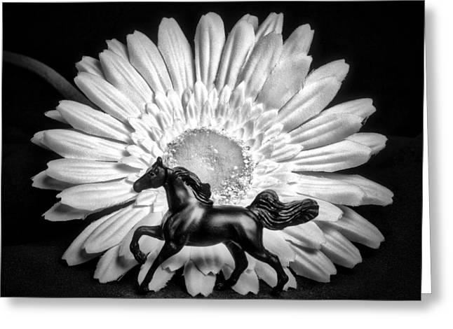 Horse And Daisy Greeting Card by Jeff  Gettis