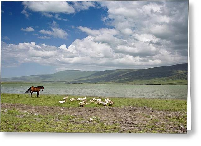 Horse And Geese By Lake Aktas Greeting Card by Bob Gibbons