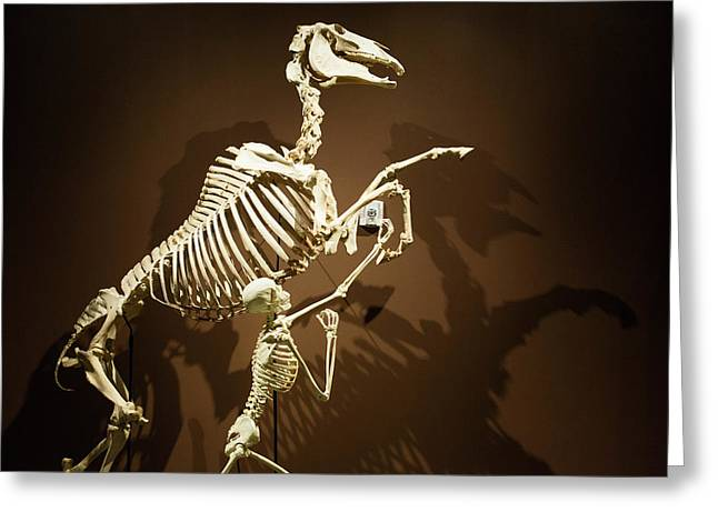 Horse And Human Skeletons Exhibit Greeting Card by Jim West