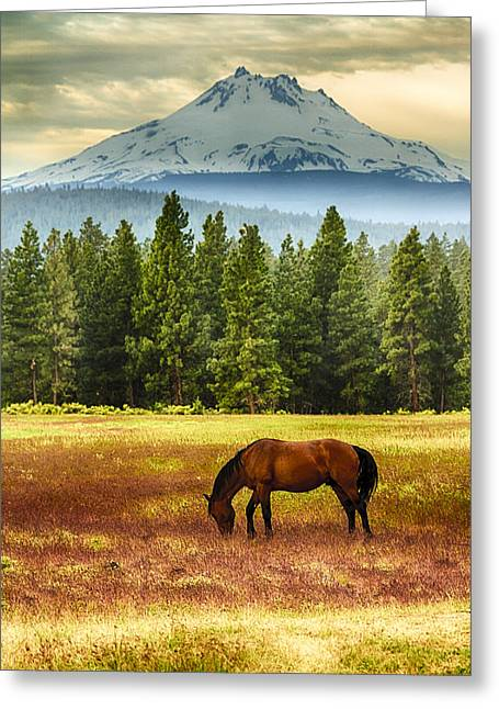 Pastureland Greeting Cards - Horse and Mt Jefferson Greeting Card by John Trax