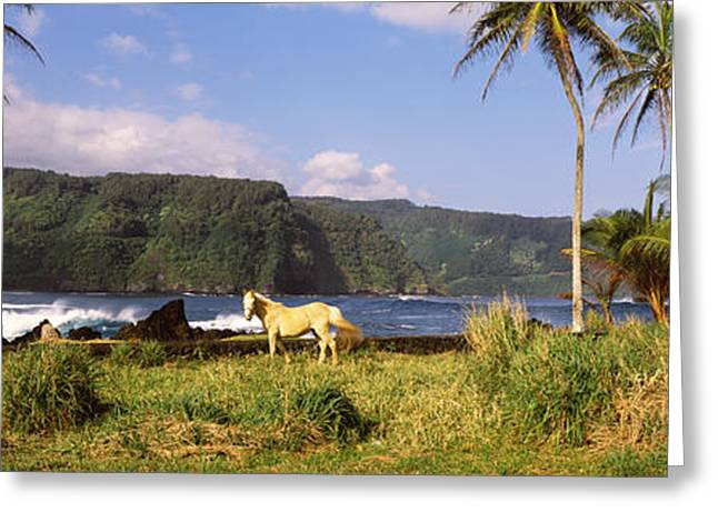 Ocean Mammals Greeting Cards - Horse And Palm Trees On The Coast Greeting Card by Panoramic Images