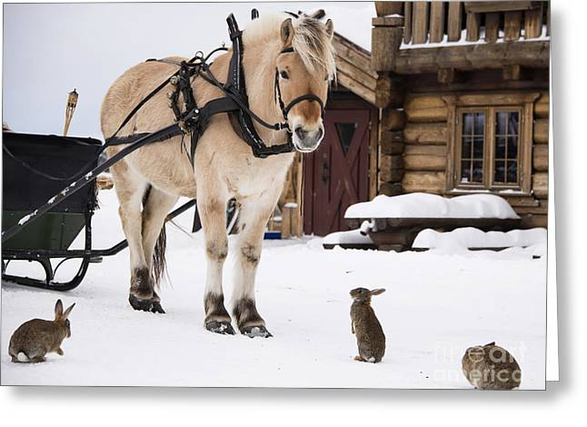 Farmlife Greeting Cards - Horse and rabbits Greeting Card by Gry Thunes