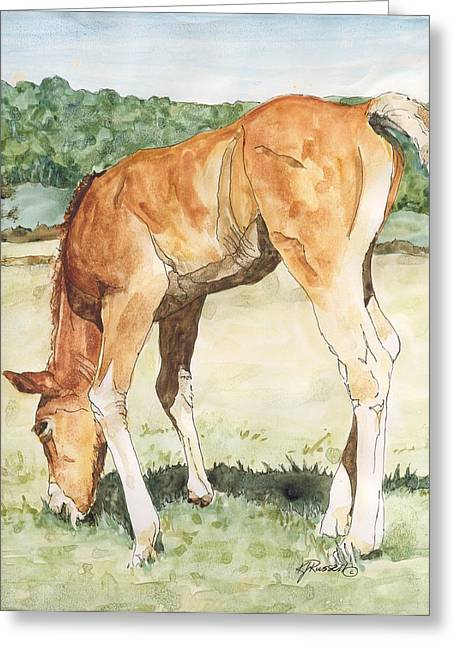 K Joann Russell Greeting Cards - Horse Art Long-legged Colt Painting Equine Watercolor Ink Foal Rural Field Artist K. Joann Russell  Greeting Card by K Joann Russell