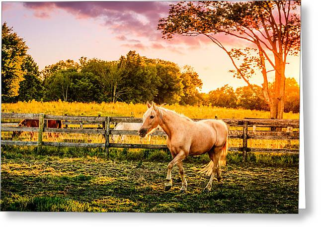 Bluegrass Greeting Cards - Horse at sunset Greeting Card by Alexey Stiop