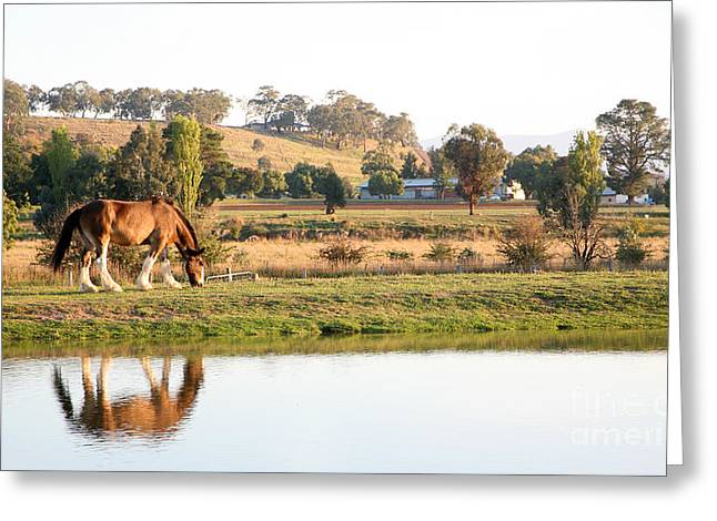 horse at sunset Greeting Card by Jacqui Martin