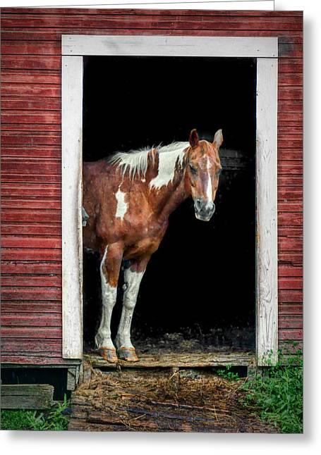 Equidae Greeting Cards - Horse - Barn Door Greeting Card by Nikolyn McDonald