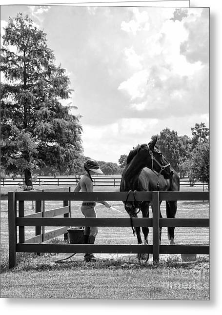 Groomer Art Greeting Cards - Horse Bathing at City Park in black and white Greeting Card by Kathleen K Parker
