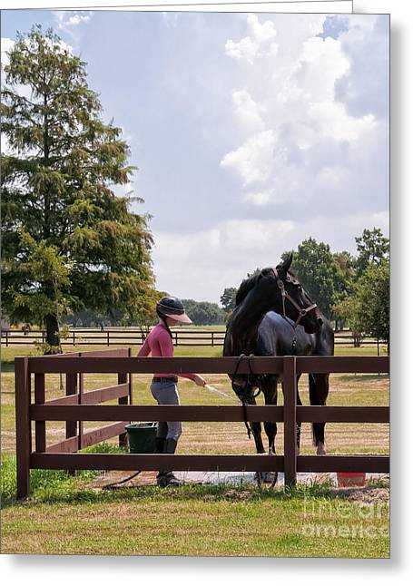 Groomer Art Greeting Cards - Horse Bathing at City Park New Orleans Greeting Card by Kathleen K Parker