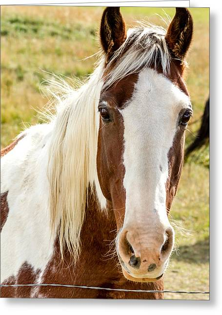 Scenic Drive Greeting Cards - Horse Beauty Greeting Card by Teri Virbickis