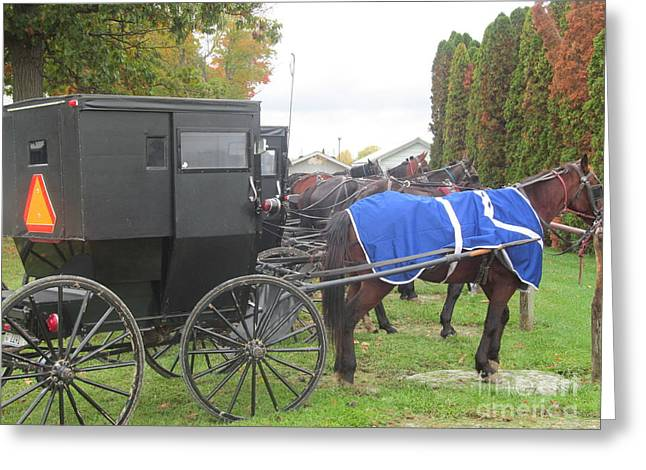 Horse And Buggy Greeting Cards - Horse Buggy Greeting Card by Tina M Wenger