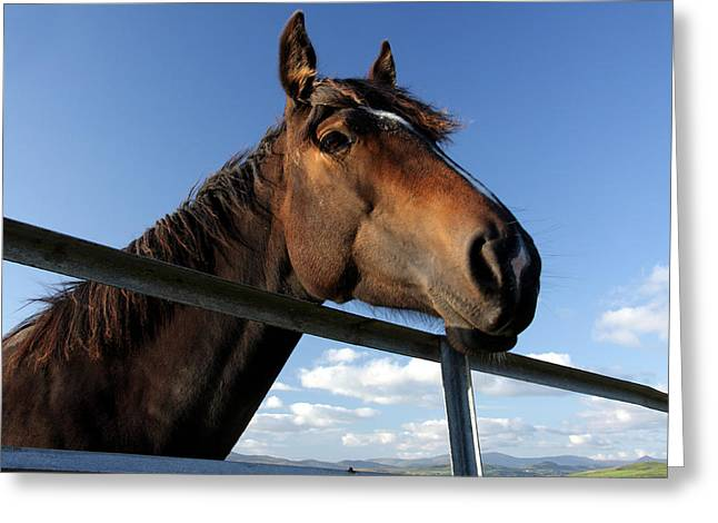 Horse Racing Prints Greeting Cards - Horse By The Gate Greeting Card by Aidan Moran