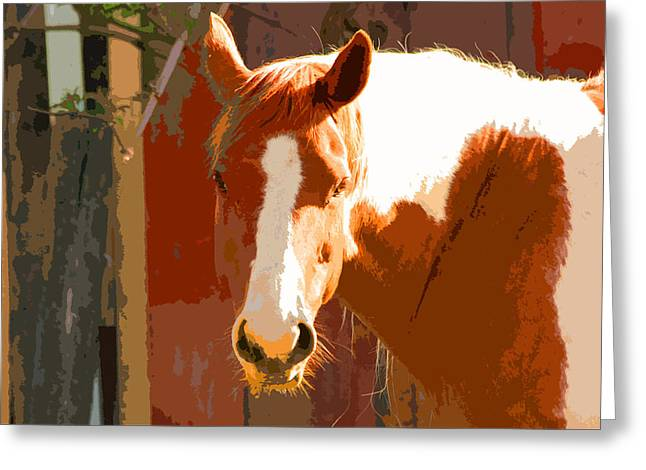 Yearling Horse Greeting Cards - Horse Greeting Card by Carol McCarty