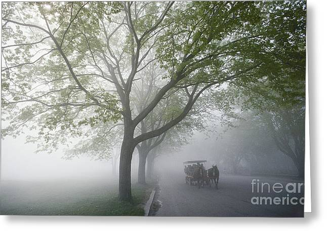 Horse Carriage Greeting Card by James L. Amos