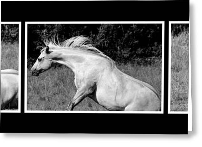 Rampant Greeting Cards - Horse comes to life Greeting Card by Toppart Sweden