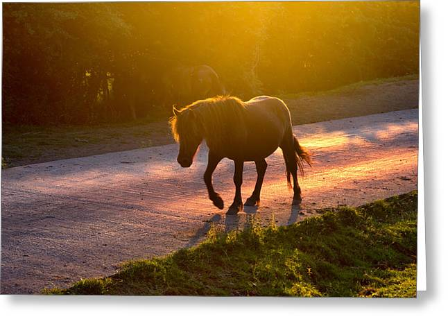 Horse Photographs Greeting Cards - Horse Crossing The Road At Sunset Greeting Card by Mikel Martinez de Osaba