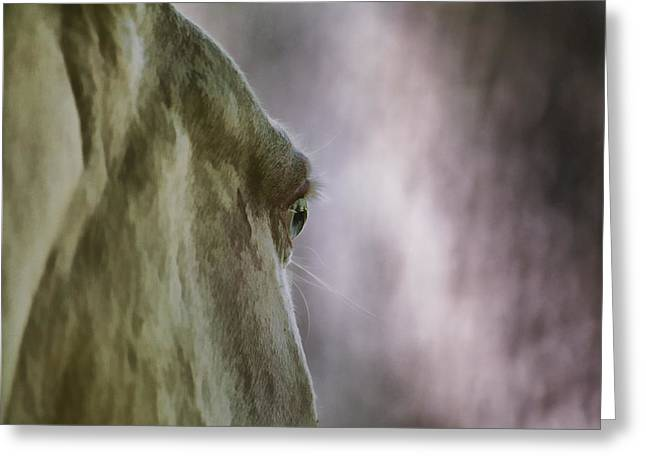 Equus Ferus Greeting Cards - Horse Greeting Card by David Letts