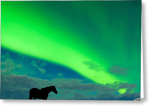 Grazing Snow Greeting Cards - Horse distant snowy peaks with Northern Lights sky Greeting Card by Stephan Pietzko
