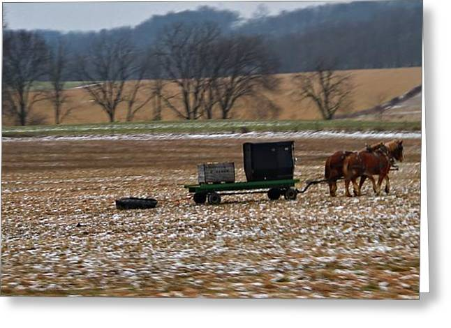 Amish Scenes Greeting Cards - Horse Drawn Plow By Amish Greeting Card by Dan Sproul