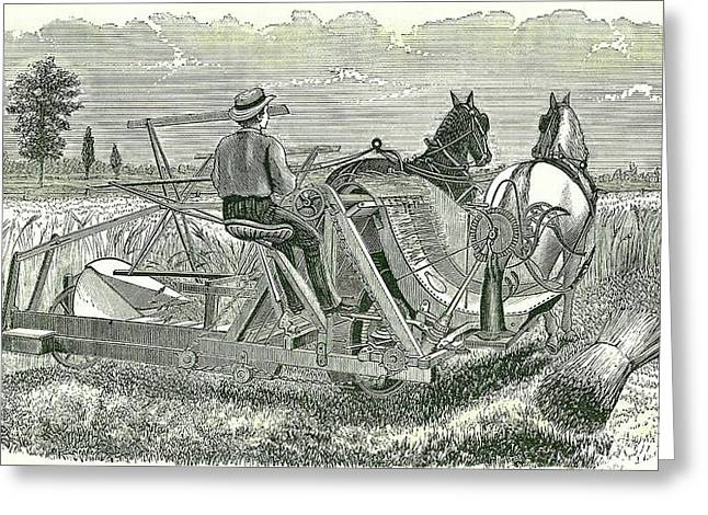 Horse-drawn Self-binding Reaping Machine Greeting Card by Universal History Archive/uig