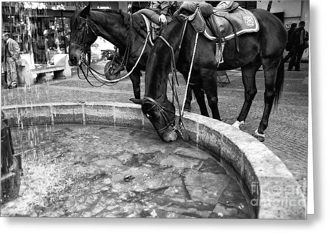 Horse Images Greeting Cards - Horse Drink in Santiago mono Greeting Card by John Rizzuto