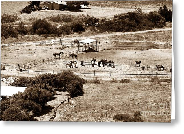 Brown Toned Art Greeting Cards - Horse Farm at Kourion Greeting Card by John Rizzuto