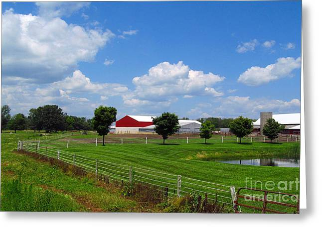 Lawn Chair Greeting Cards - Horse Farm Greeting Card by Tina M Wenger