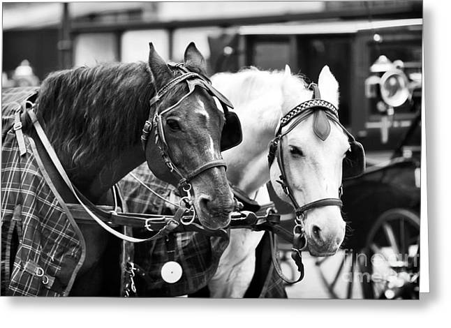 Horse Buggy Greeting Cards - Horse Friends Greeting Card by John Rizzuto