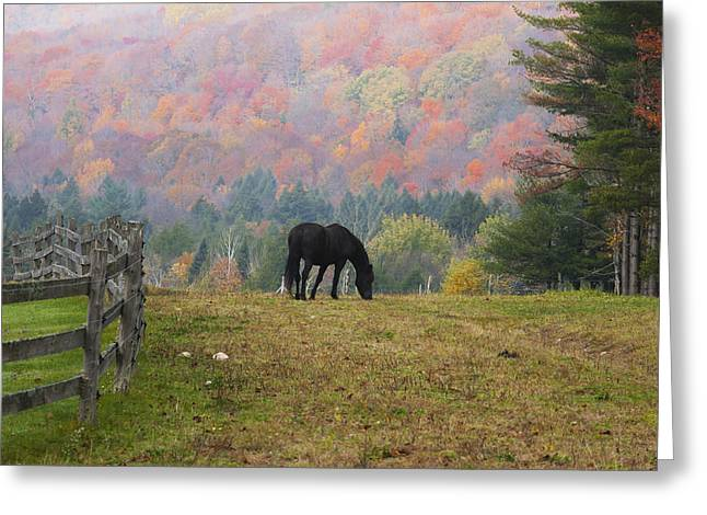Iron Greeting Cards - Horse Grazing In Early Morning Light Greeting Card by David Chapman