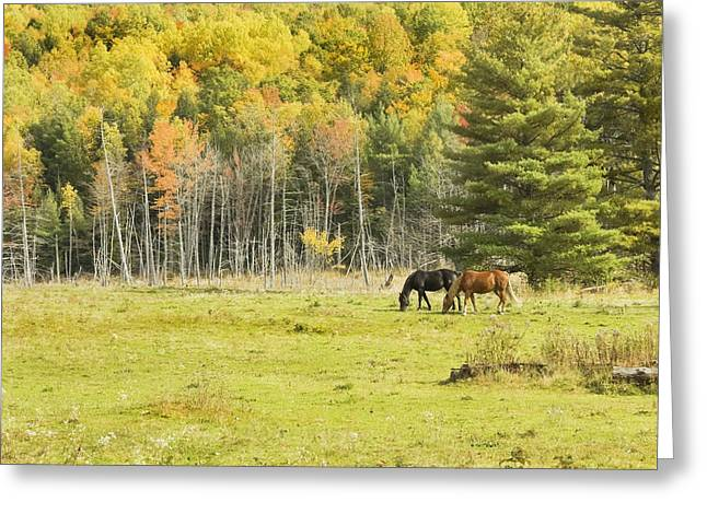 Paddock Greeting Cards - Horse Grazing In Field Autumn Maine Greeting Card by Keith Webber Jr