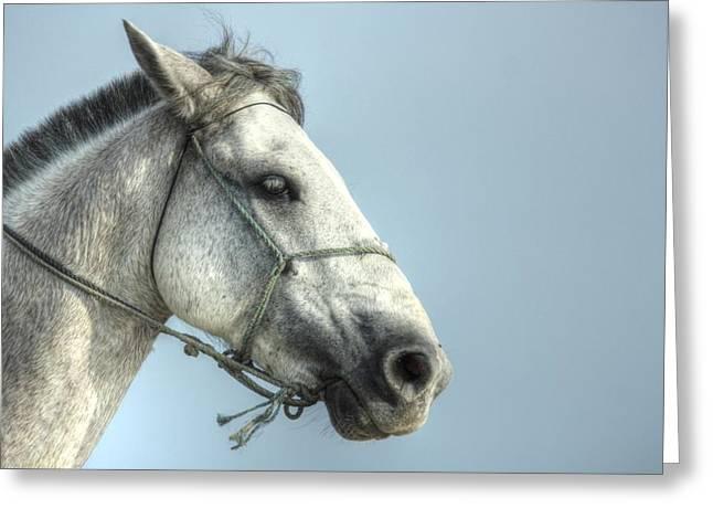 Farmlife Greeting Cards - Horse head-shot Greeting Card by Eti Reid