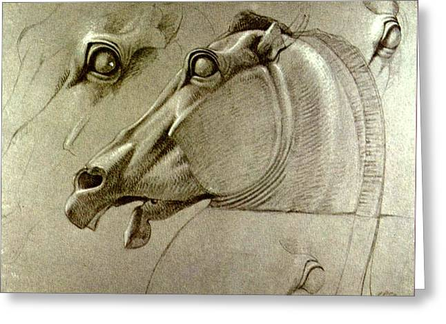 The Horse Greeting Cards - Horse Head Sketch Greeting Card by