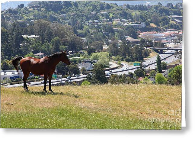 Horse Hill Mill Valley California 5D22663 Greeting Card by Wingsdomain Art and Photography