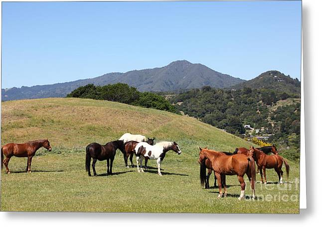 Horse Hill Mill Valley California 5D22672 Greeting Card by Wingsdomain Art and Photography