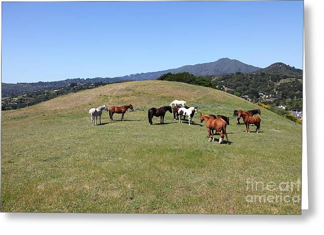 Marin County Greeting Cards - Horse Hill Mill Valley California 5D22673 Greeting Card by Wingsdomain Art and Photography