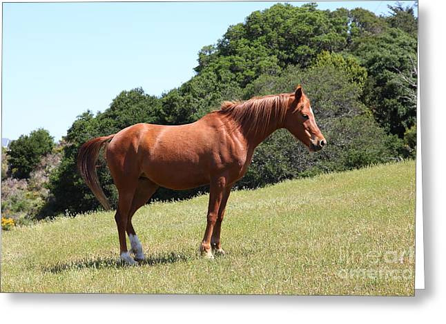 Horse Hill Mill Valley California 5D22683 Greeting Card by Wingsdomain Art and Photography