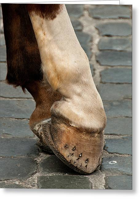 Horse Art Photographs Posters Greeting Cards - Horse Hoofs Greeting Card by Xavier Cardell