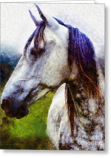 Horse I Dream Of You Greeting Card by Janine Riley