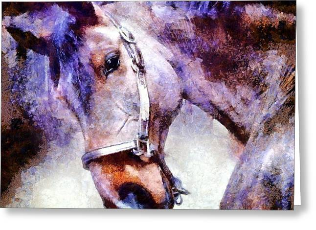 Looking In Greeting Cards - Horse I will follow you Greeting Card by Janine Riley